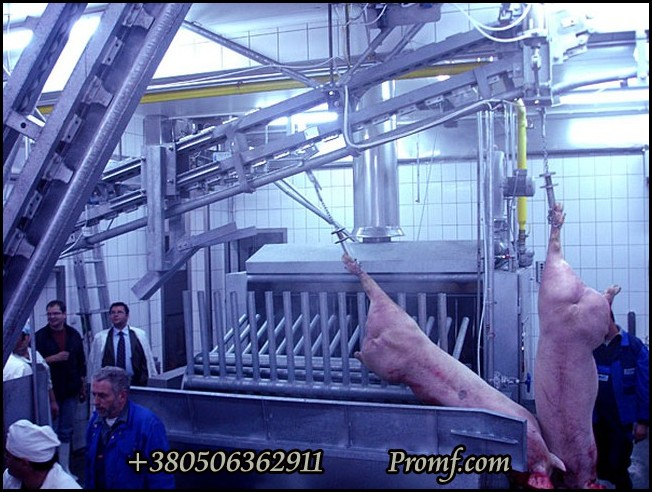 Опаливания свиней своими руками 896